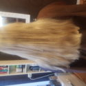 Virgin scandinavian blonde 12 ""